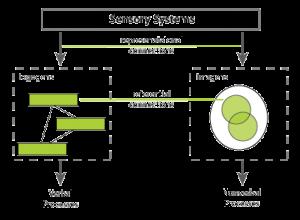 Dual Coding Theory (Allan Paivio) - InstructionalDesign org